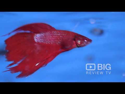 addicted-2-cichlids-an-aquarium-shops-in-sydney-selling-cichlids-and-goldfish