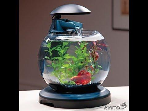 Cascade globe acuario 6 litros youtube for Mini aquarium boule