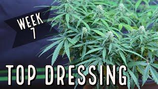 Season 2 (Week 7): How to Top Dress