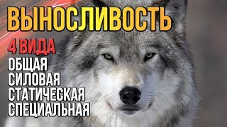 Выносливость Волка Почему нужна выносливость любому человеку