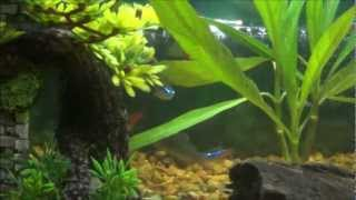 Flyfalcons 10 Gallon Fish Tank Guppies, Neons, And Cory Cat