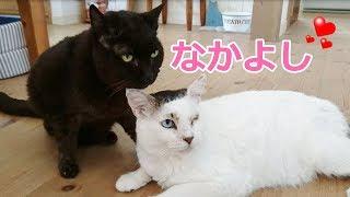 ぱっつんオカッパ頭がトレードマークの片目の福ちゃんと黒猫のクロちゃ...