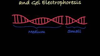 Gel Electrophoresis Explained