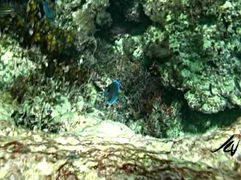 Starfish Trelawny In Jamaica ~ Now Breezes Trelawny