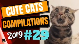 Cute Cats Compilation 2019 - Funny And Cute Cats - Cutest Cats Compilation 2019 #29