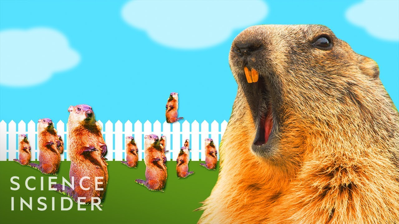 Download Why Groundhogs Are So Hard To Get Rid Of