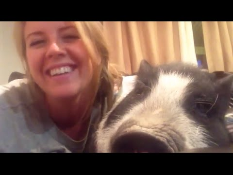 Virginia the Grumble Pig