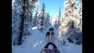 Jan. 29, 2015 Husky ride @ Fairbanks, Alaska 全程大約15~20分鐘只錄...