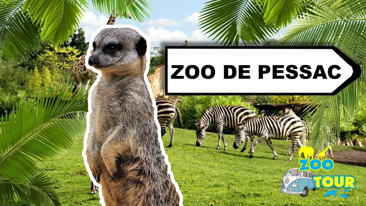 Zootour 4 zoo bordeaux pessac youtube - Point p pessac ...
