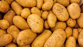 LEARN GERMAN Picture Dictionary  ► die Kartoffel ⇔ potato ◄ Vocabulary   Example Sentences