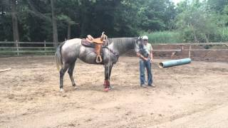Stable handler demonstrates working horse out