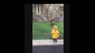 ライオンVS子供 ありえない恐怖.