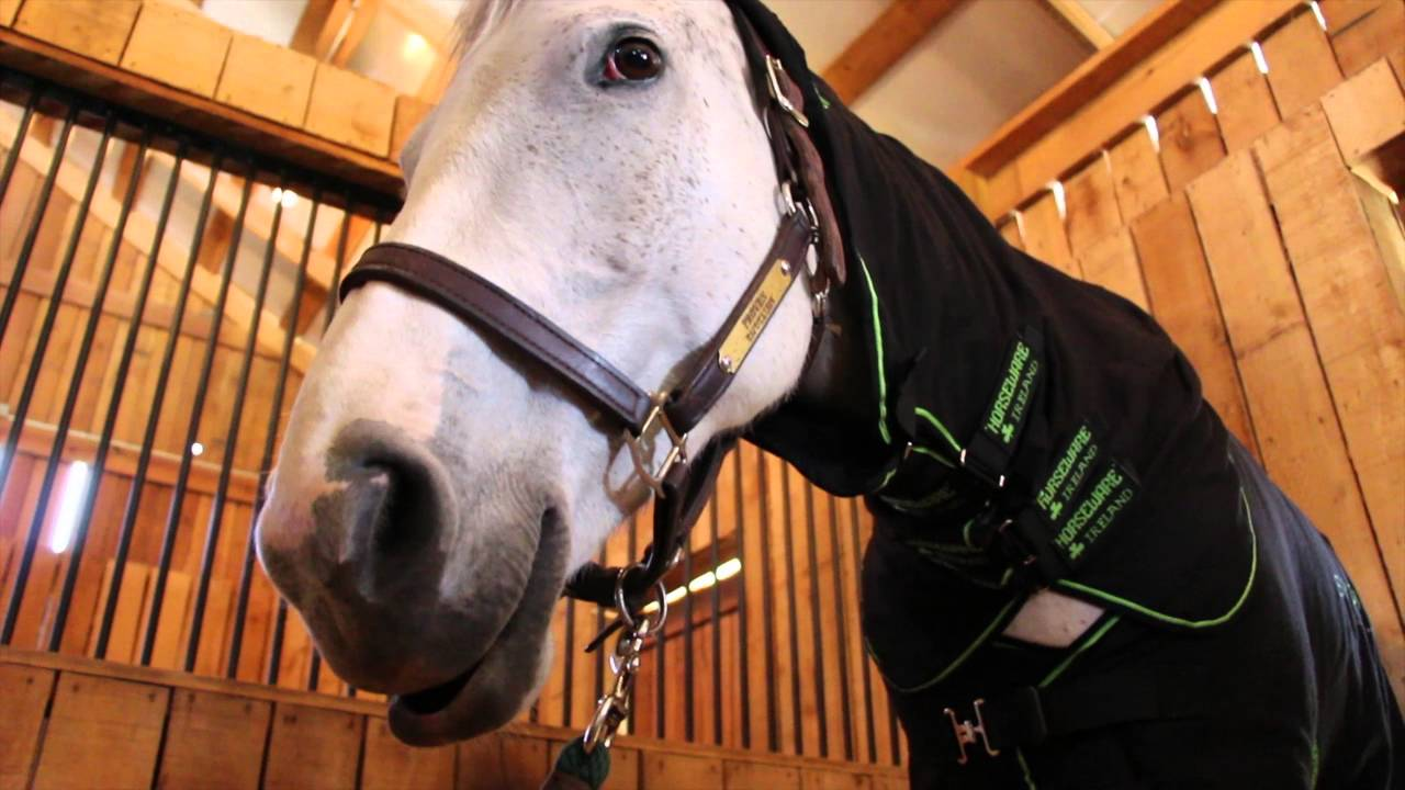Horseware Ireland Sportz-Vibe Massage