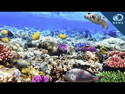 what-are-coral-reefs-and-what's-their-purpose?