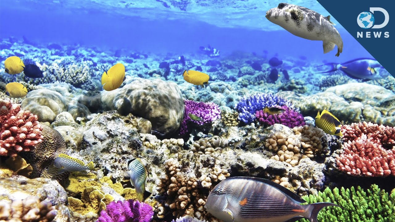 What Are Coral Reefs And What's Their Purpose? - YouTube