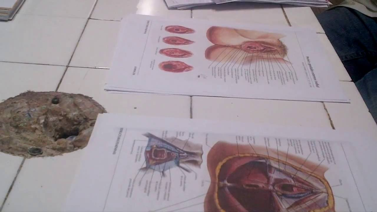 Repaso de Anatomia 2 de pelvis Dr Fernando Castillo Cuarta Parte ...