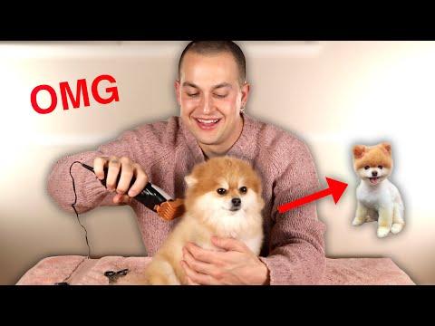 giving-my-friend-s-dog-a-haircut