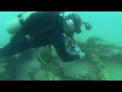 Bermuda Shipwreck Study