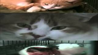 Кошки краснодога Тёплые коты