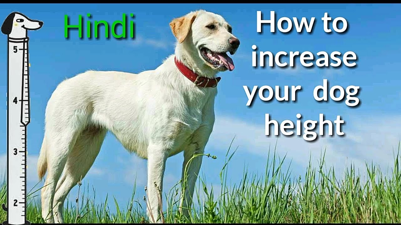How To Increase Your Dog Height Hindi Pet Care Hindi Youtube
