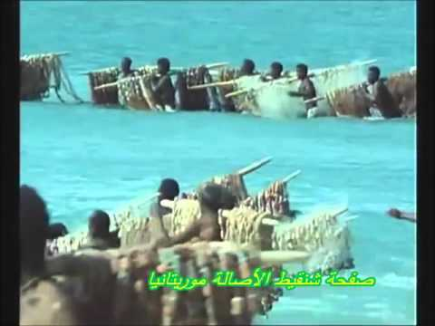 Dolphin-assisted Fishing in Mauritania