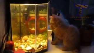 Коты и аквариумы. Funny cats vs fish tanks
