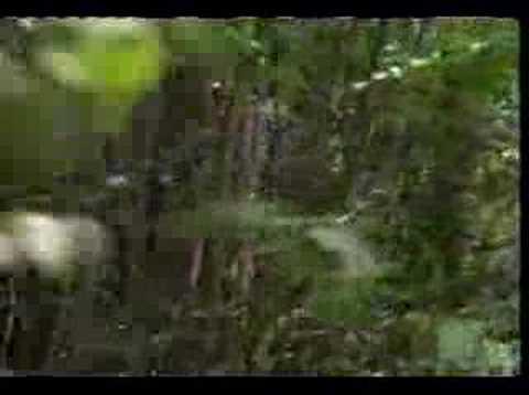 Bare essentials (1991) watch online