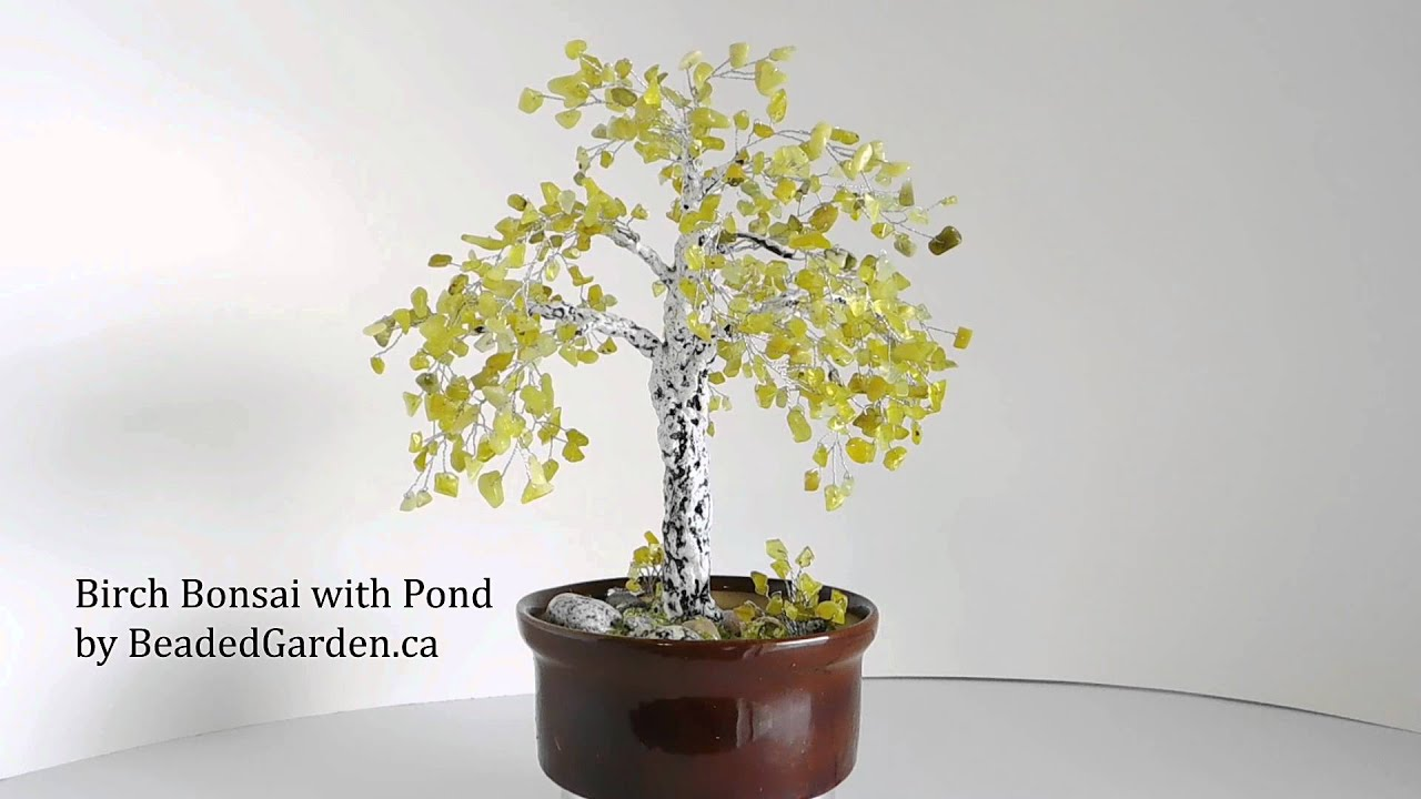 Birch Bonsai With Pond In Ceramic Pot New Jade Youtube Wiring Demo