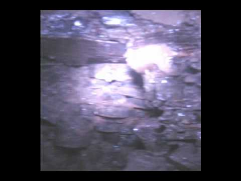 Drilling rig down hole camera