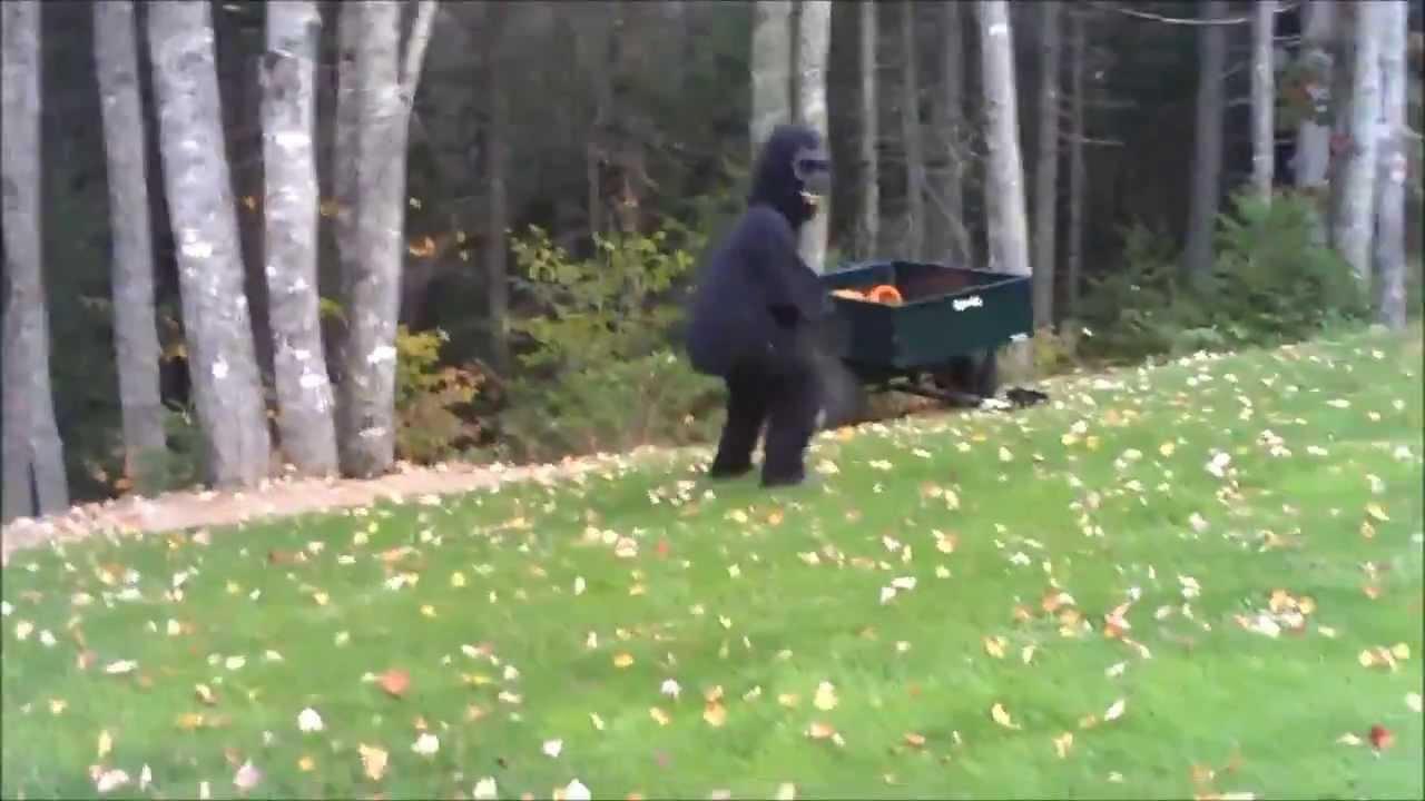 Bigfoot Caught On Camera Youtube