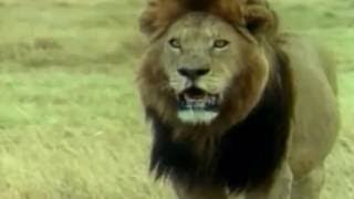 X Animals Boner Season Animal Boner Best Moment Compilation 2016 Funny Animal 1