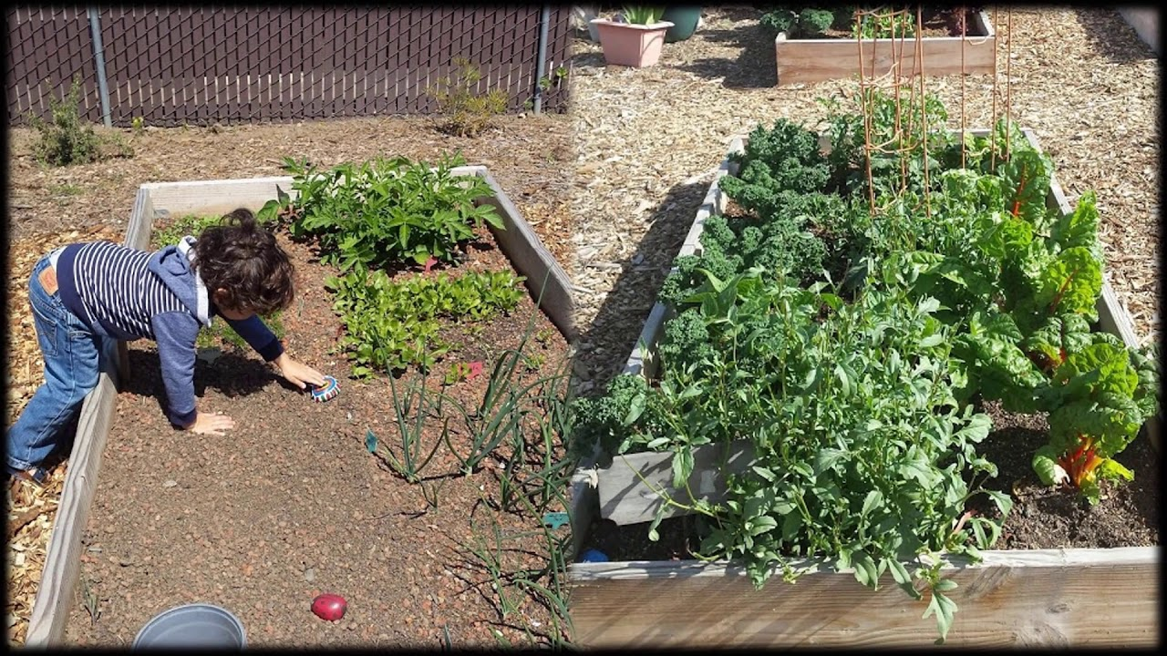 Evolution of a community garden