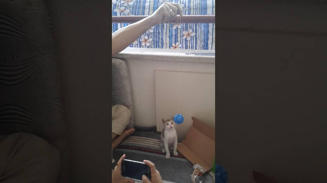 Evde kedi bakımı nasıl olmalıdır