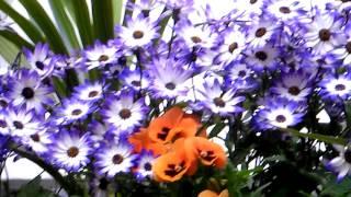 Flowers Window Box Shady