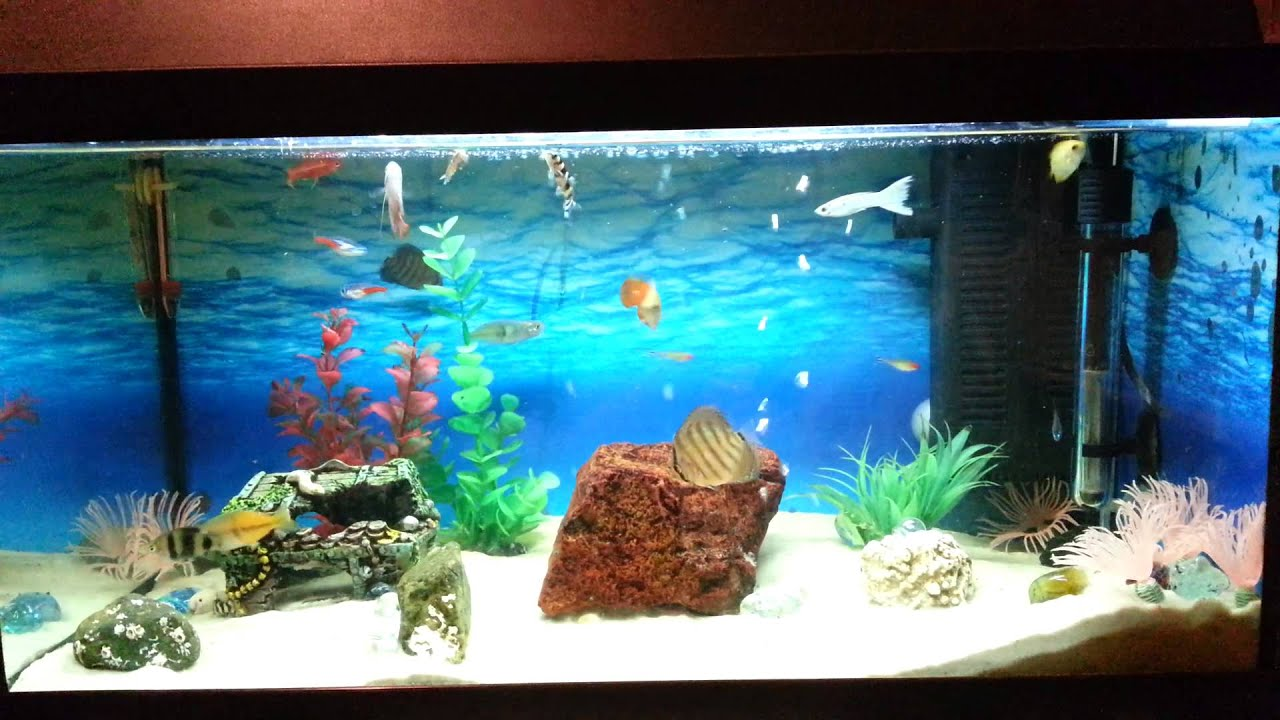 Best tropical fish tank setup youtube for Exotic fish tanks