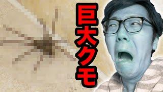 【閲覧注意】部屋に巨大クモが出現し大パニック! thumbnail