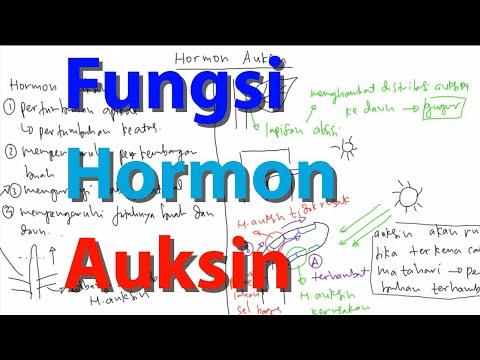 Video Pembelajaran Fungsi Hormon Auksin pada Tumbuhan