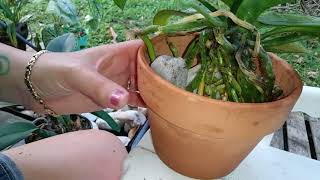 Orchid Potting with River Rock
