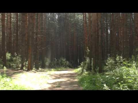 Дорога в лесу 2015 Воткинск