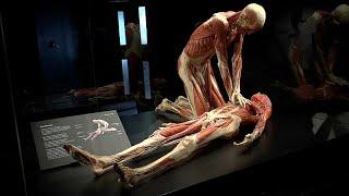 Spectaculaire exposition londonienne sur le corps humain
