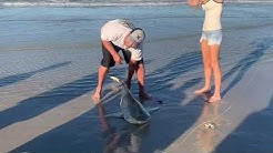 Shark Caught at Ponce Inlet