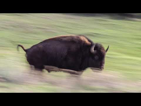 The Wildlife Photo Show - Yellowstone