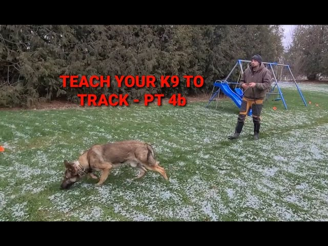 How to train your K9 to track - part 4b