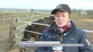 Davron : L'élevage de chevaux d'Estelle Trahard en danger