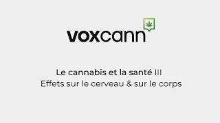 Projet VoxCann - Le cannabis et la santé III: Effets sur le cerveau et le corps