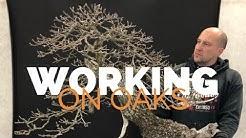 Working on Oaks