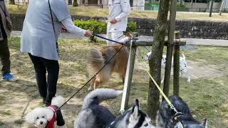 江南中央公園で、わんわん撮影会   神戸の中野理恵ちゃんと名古屋で合流...