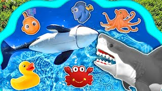 Learn Sea Animals Names In Ocean Blue Swimming Pool - Animal Toys For Kids