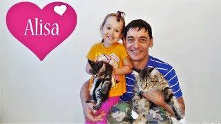 Алиса играет с котятами МЕЙН-КУН  Детский канал Little baby Алиса