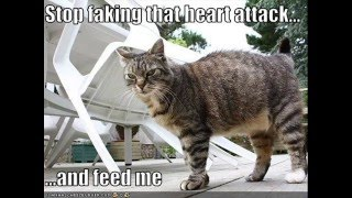 When LOLCats Go Bad Evil LOL Cats Funny Cats